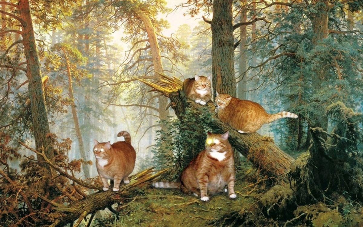 Мишки в лесу коты